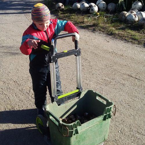 Farm Kids Melshell Oyster Shack Tasmania Family