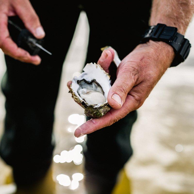 Melshell Oyster Shack Tasmania Fresh Farmer Aquaculture